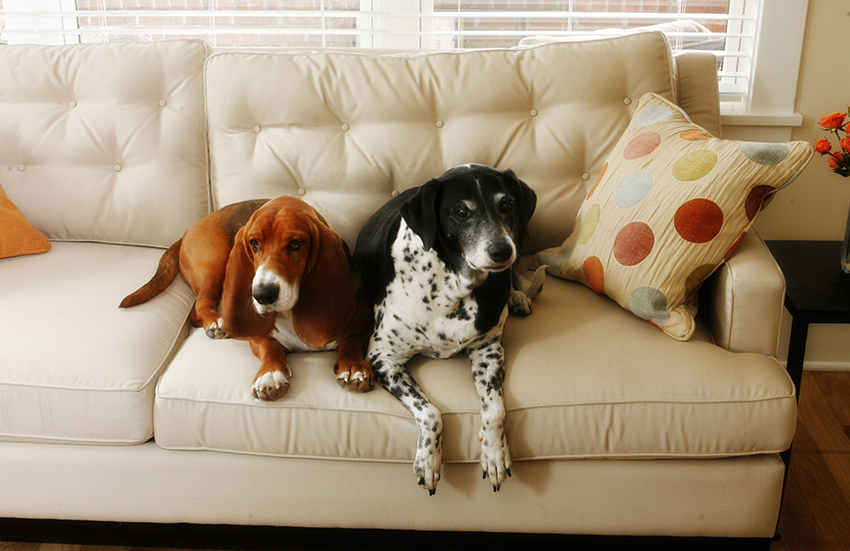 Dog owners looking for a new pad in London have to pay premiums for pet-friendly homes.