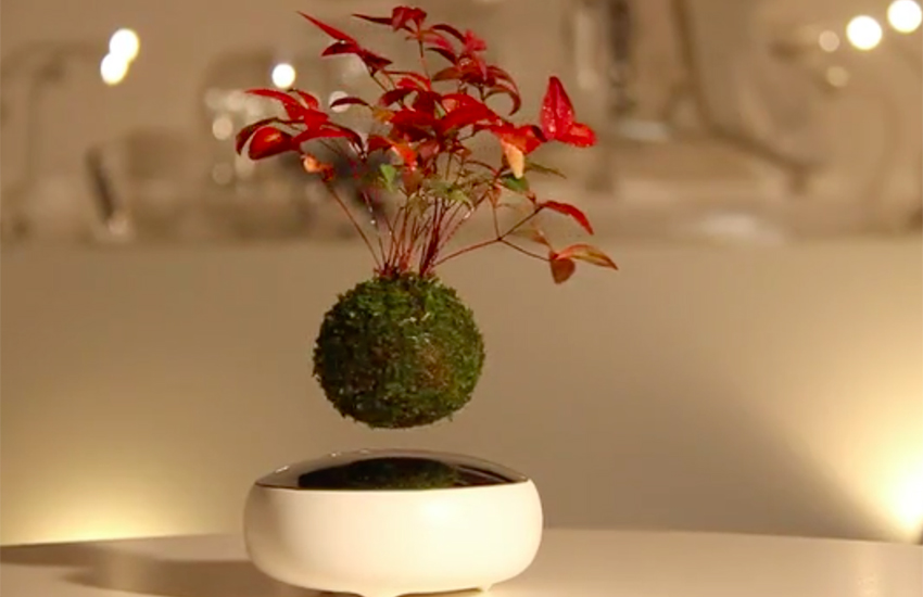Magnets help the Air Bonsai defy the laws of physics.