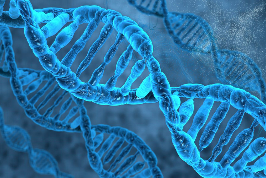 Does the 'gay gene' exist?