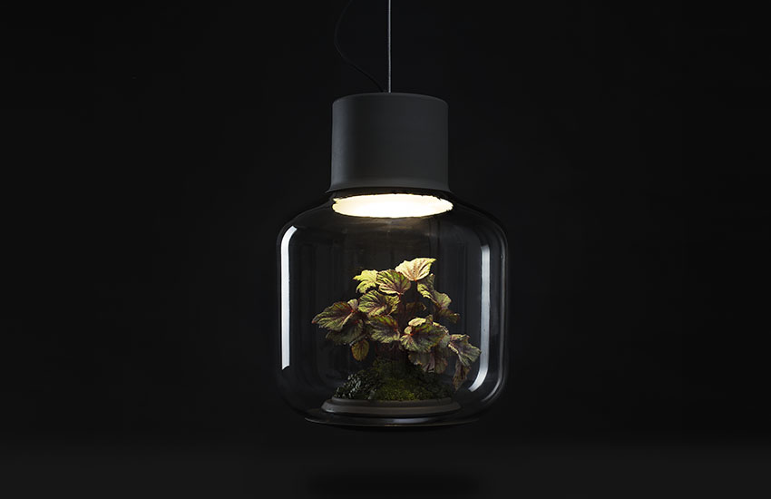 Inside the Mygdal lamps' bulbs, a self-sustaining ecosystem keeps plants alive and happy.