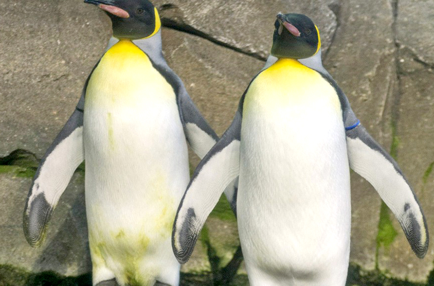 Stan and Olli are a gay penguin couple that just want to be accepted
