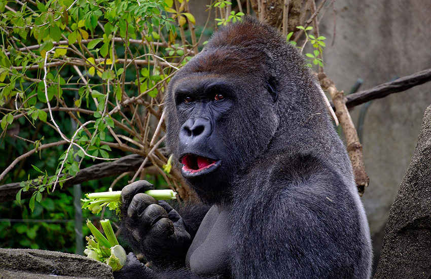 Gisela Allen said LGBTI people should keep their sexuality private, like she does her attraction to gorillas