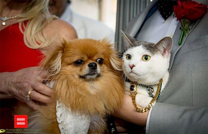 Cat and dog get married on Real Housewives to fight for