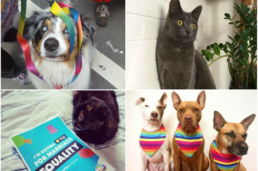 dogs cats marriage equality doggos moggos