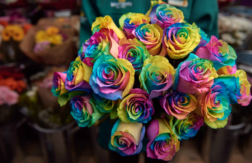 Morrisons rainbow rose support lgbt homeless charity