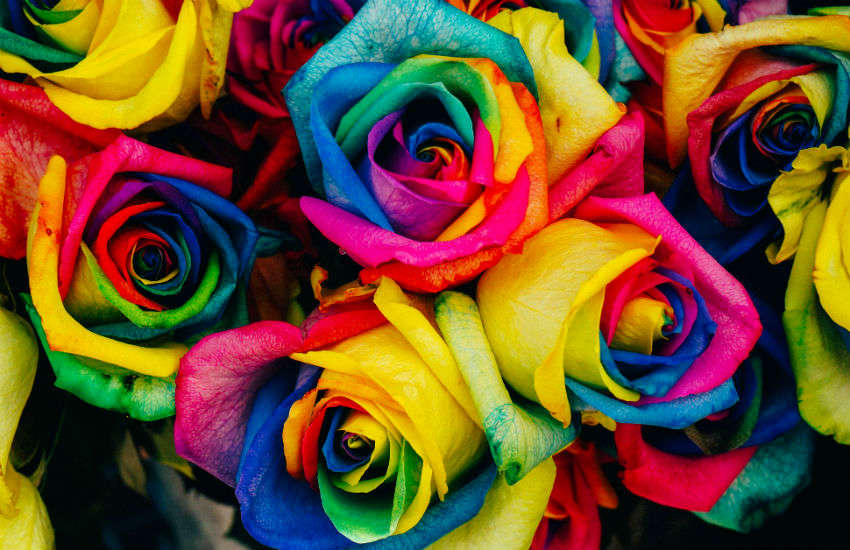 A bouquet of rainbow roses